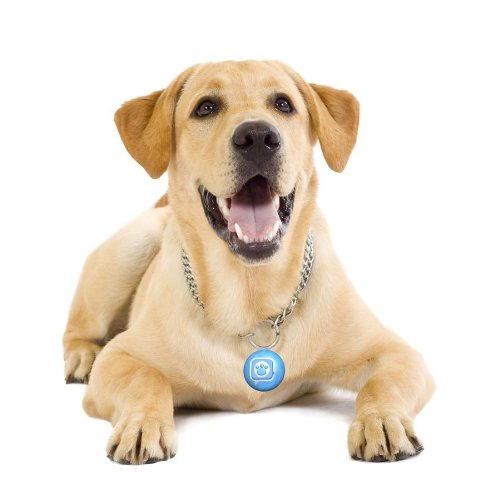 Dog with Tag