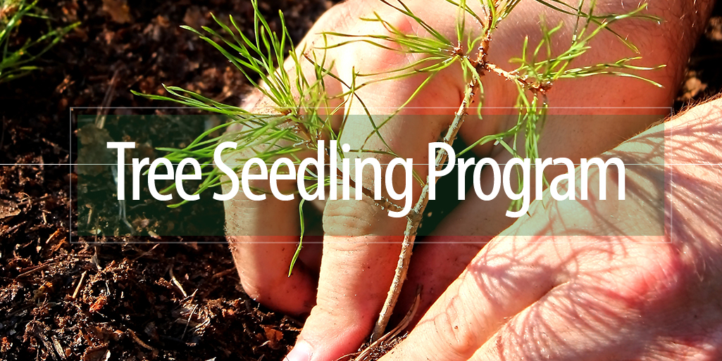 2020 Tree Seedling Program